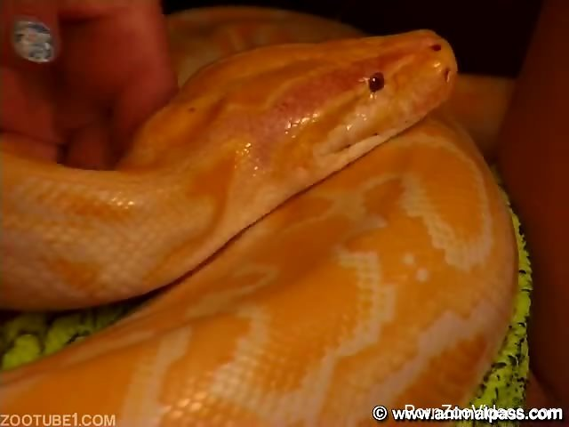 Rough sex with snake in pussy dring home zoophilia