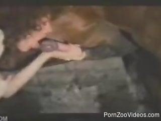 Brutal horse porn amateur scenes along a needy mature woman