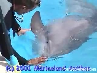 Crazy dolphin porn video caught on cam in very spicy details