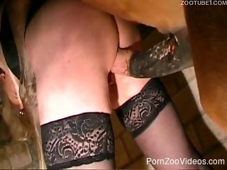Zoophilic slut in stockings banged by horse
