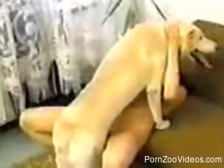 Two girls in stockings fucks with their lovely doggy