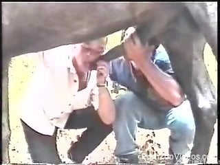Gay men sucking a horse dick in otudoor zoophilia