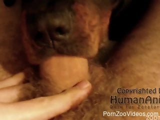 Gorgeous brown dog deepthroating a massive cock in POV
