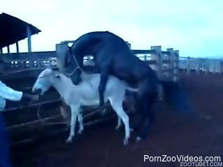 Aroused horse penetrates submissive donkey in doggystyle