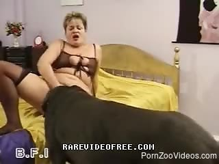 Fat mature gives dog blowjob and then attracts him to lick pussy