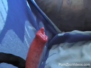 Erect joystick of trained hound is in hands of his dirty owner