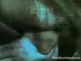 Horny man insert erect phallus into hole of farm animal