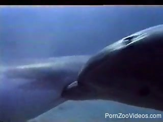 Filming awesome ocean sex of two passionate dolphins