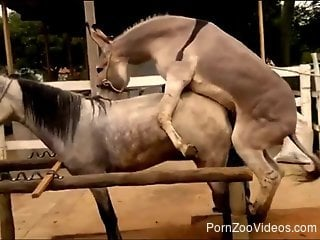 Two horses have awesome sex at the farm in doggy style pose