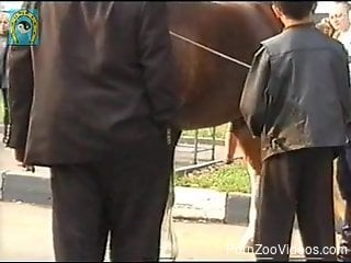 Brown horse with short cock is walking in the city