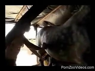 Hot-looking beauty and hardcore black horse fuck in the barn