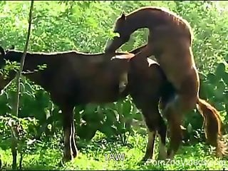 Beautiful horse have amazing sex in doggy style pose