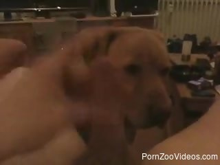 Cute-looking doggy is sucking his huge dick with love