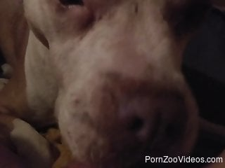 POV cunnilingus video featuring an attentive dog