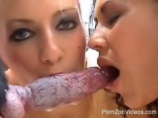 Two good-looking babes sharing a dog's tasty cock