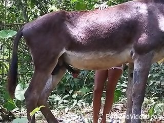 Wife grabs the donkey's huge dick and plays with it