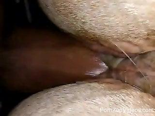 Zoophilia XXX