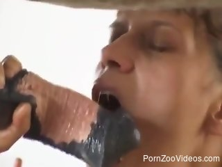 Mature sucks the horse dick in pretty hot manners