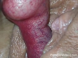 Extra-hard and veiny dog cock invades that hole