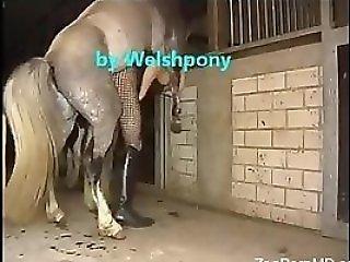 Animal Porn